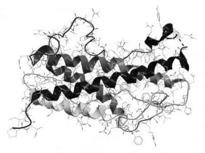 Соматотропин — гормон отвечающий за рост.